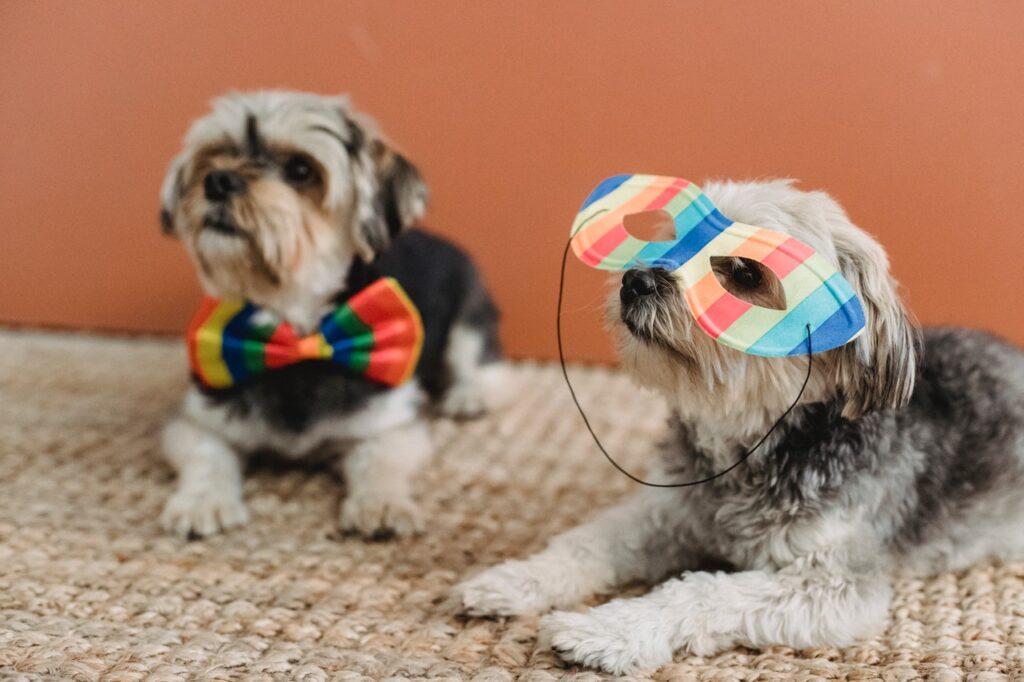 3 Ways to Treat Your Dog
